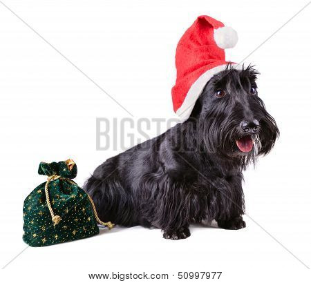 Christmas Dog In Santa Cap