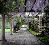 image of asheville  - Wistera Lane at Biltmore Estate in Asheville - JPG