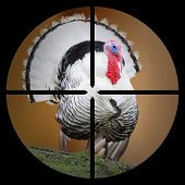 A Turkey in the Hunter's scope.