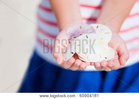 Close up of child hands holding sand dollars