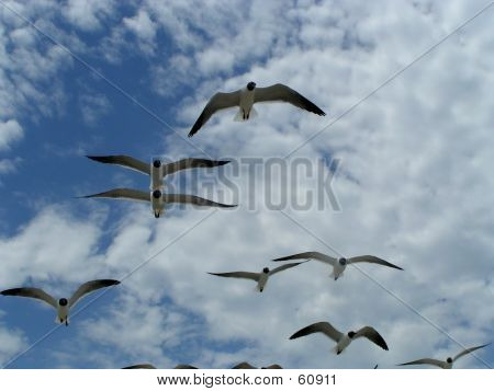 Seagulls In Flight 3