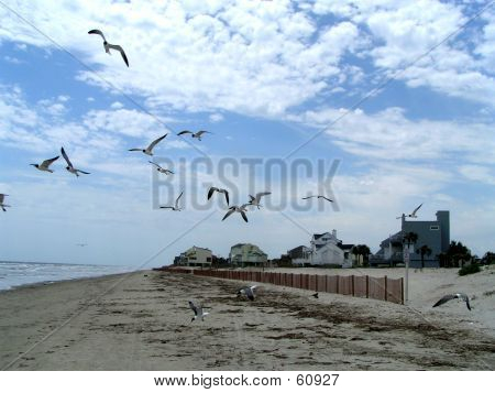 Seagulls In Flight 9