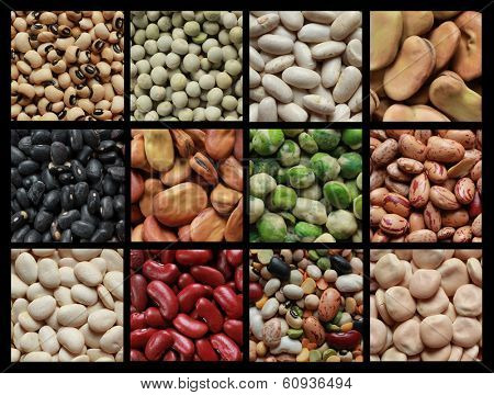 Collage showing different kind of beans like green peas, black eyed beans and brown fava.
