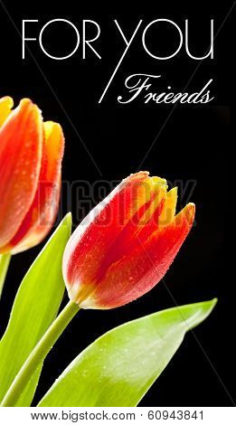 Red tulips on the black background - isolated text