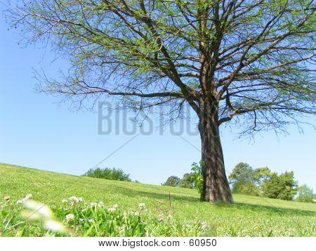 Bäume auf Hügel In Sicht