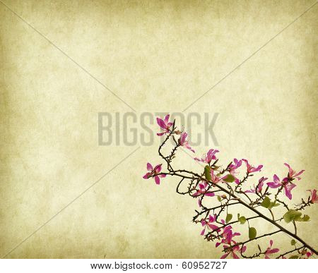 Red redbud on old background