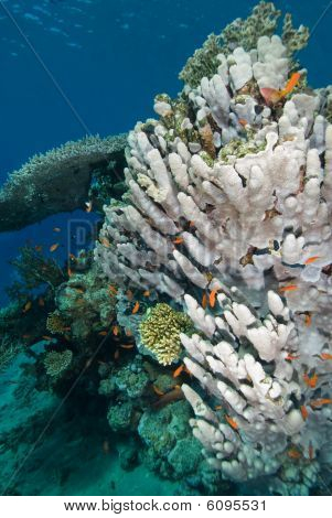 A Heatlhy Coral Reef