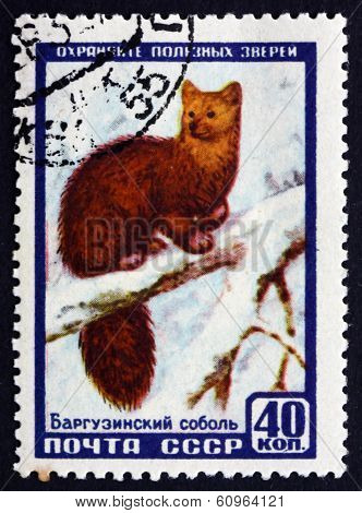 Postage Stamp Russia 1957 Sable, Animal