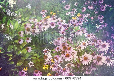 Purple coneflower garden with an artistic texture overlay fora vintage effect.