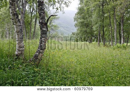 Humid meadows after rain.