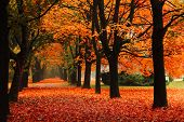 stock photo of orange-tree  - red autumn nature in the czech park - JPG