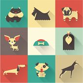 picture of dog breed shih-tzu  - Cute vector illustration of various dog breeds - JPG