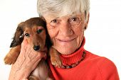 stock photo of dachshund  - Senior woman holding her new dachshund puppy - JPG
