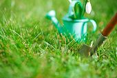 time for garden now�?�¢?�?�¦. decorative small gardening tools and snowdrops  on grass