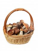 The raw boletus edulis in a basket