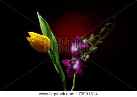 orchid branch and tulip with water drops on them in studio