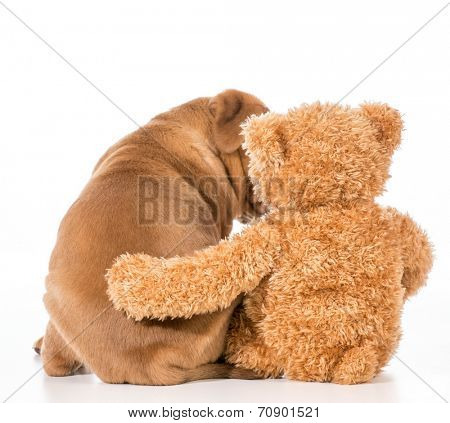dog and teddy bear with their arms around each other