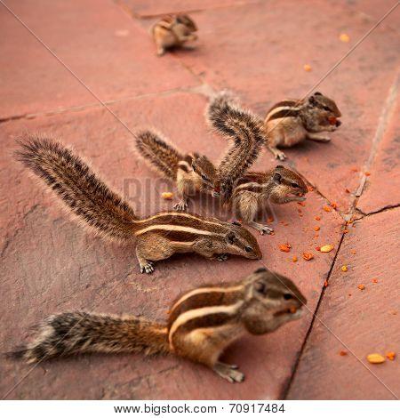 group of chipmunks eating nuts