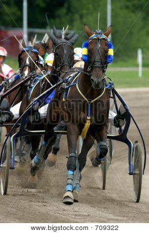 carreras de caballos