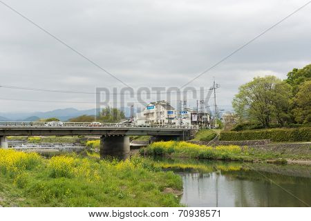 KYOTO, JAPAN - APRIL 20th : Scenery of Kamogawa with yellow flowers and bridge in Kyoto, Japan on 20th April 2014.