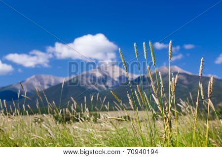 Farmyard And Grasses By Mt Princeton Co