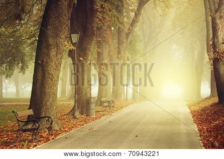 Park path on a foggy autumn day