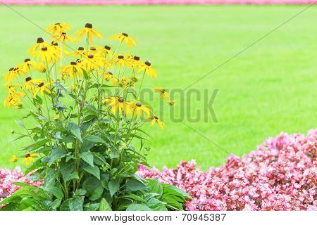 Floral Frame Backdrop With Yellow And Pink Garden Flowers