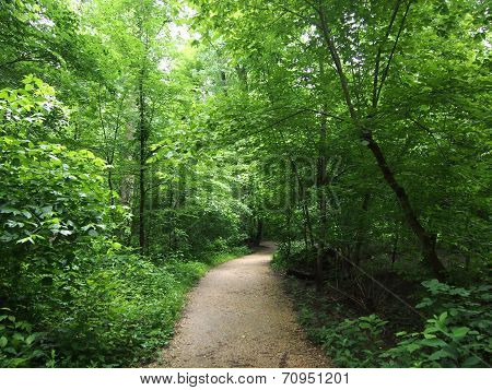 Dirt Path In Forest
