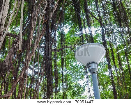 Lamp Pillar Under Branch Of A Banyan Tree