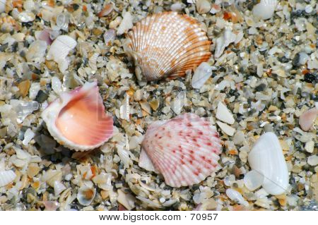 Three Colorful Shells