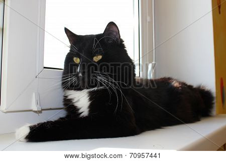 Black Cat Laying On The Window-sill