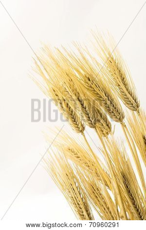 Barley in vertical composition