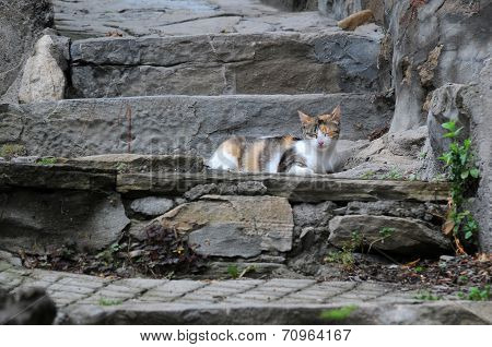 Cat On Old Steps