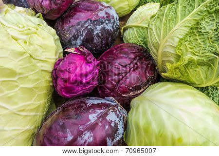 Colorful cabbage arrangement