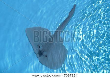 Krampf Fisch