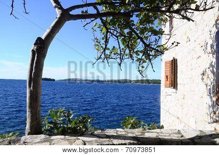 Wall, Tree And Sea In Rovinj, Croatia