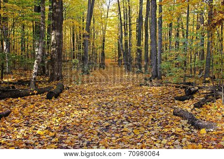 Scenic view of autumn forest