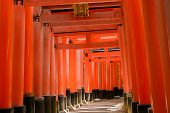 picture of inari  - Light and shadow of thousands of Torii - JPG