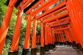stock photo of inari  - Thousands of Torii with green trees background - JPG