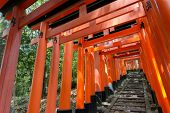 stock photo of inari  - Thousands of Torii with stone steps - JPG