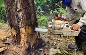 picture of man chainsaw  - lumberman with chainsaw is cutting the tree - JPG