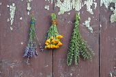 picture of hyssop  - medical herbs bunch on old wooden wall p marigold calendula hyssop and lavender - JPG
