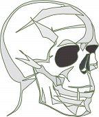 picture of eye-sockets  - vectorial image of human skull  by black empty eye sockets - JPG