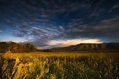 pic of cade  - Autumn color at dusk in a golden grass - JPG