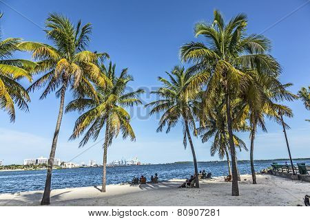 People Relax At The Downtown Beach Under Palms