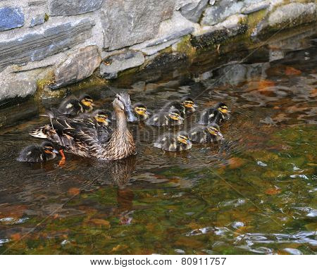 Caring For The Brood.