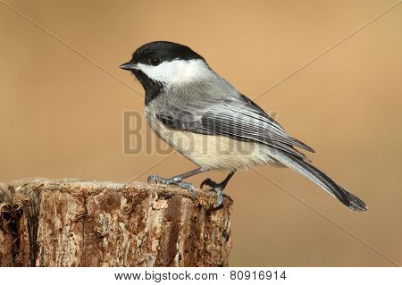 Bird On A Stump In Winter