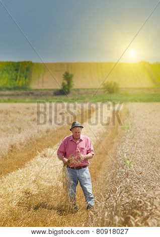 Man On The Wheat Field