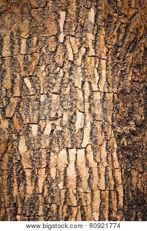 Brown Wood Bark