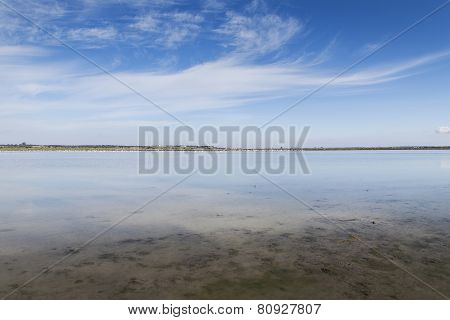 Horizon in flooded rice field